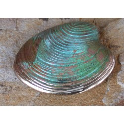 ECP6p Verdigris Patina Solid Brass Clam Shell Pin